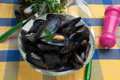 Italian typical mussels sumo called `Impepata di cozy`. stock image