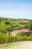Italian villa with vineyard: spring season Stock Photos