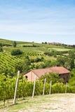 Italian villa with vineyard: spring season. Charming Italian villa in Monferrato area (Piemonte region, north Italy) during spring season Stock Photos