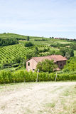 Italian villa with vineyard: spring season Royalty Free Stock Images
