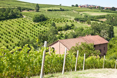 Italian Villa With Vineyard: Spring Season Stock Photography