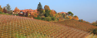 Italian village and vineyards. Stock Photography