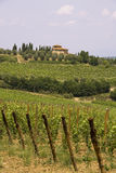 Italian vines Stock Images