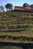 Italian vineyard Stock Photography