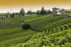 Italian vineyard Stock Photos