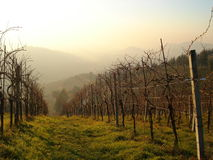 Italian vineyard Royalty Free Stock Photography