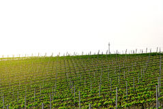 Italian vineyard in a clear spring day royalty free stock photography