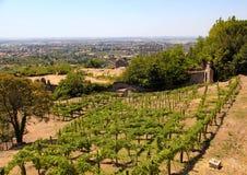 Italian vineyard in countryside of Tivoli. Near Rome royalty free stock photo