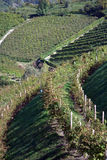 Italian vineyard hill Royalty Free Stock Photos