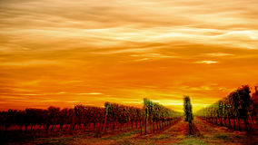 Italian vineyard idyllic landscape Stock Photo