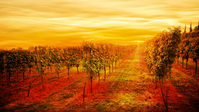 Italian vineyard idyllic landscape Royalty Free Stock Photo