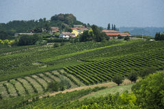 Italian Vineyard. Vineyard in the north of Italy Royalty Free Stock Images