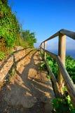 Italian vineyard path in sunset rays Stock Photo