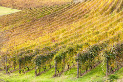 Italian Vineyard Royalty Free Stock Images