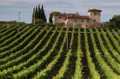 Italian vineyard on a sunny day. Over looked by the country house royalty free stock images