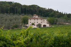 Italian vineyard on a sunny day. A view of an Italian vineyard and country house on a sunny day stock photo