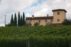 Italian vineyard on a sunny day. A view of an Italian vineyard on a sunny day n royalty free stock photos