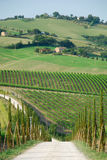 Italian vineyards Stock Photos