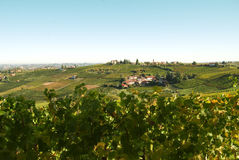 Italian vineyards. Nice landscape of vineyards hill in Piedmont in Italy. This region is between Langhe and Monferrato where extraordinary wines like Barbera royalty free stock image