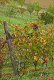 Italian vineyards Stock Photo
