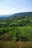 Italian vineyards in august Stock Photos