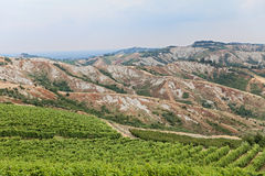 Italian vineyards Stock Image