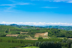 Italian vineyards Stock Images