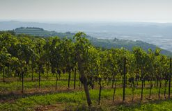 Italian vineyards in Valpolicella Area, Veneto, Verona, Italy stock photos