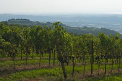 Italian vineyards in Valpolicella Area, Veneto, Verona, Italy. Valpolicella Vineyards in Verona, Veneto, Italy royalty free stock photo