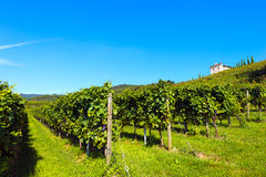 Italian Vineyards - Valpolicella Wine. Typical Italian red grape vineyards at the base of the hill with blue sky stock photos