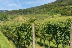 Italian Vineyards - Valpolicella Wine - Verona. Typical Italian red grape vineyards at the base of the hill with blue sky. Valpolicella Wine - Verona, Italy stock photos