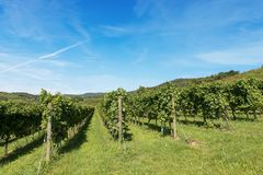 Italian Vineyards - Valpolicella Wine - Verona. Typical Italian red grape vineyards at the base of the hill with blue sky. Valpolicella Wine - Verona, Italy stock image