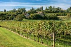 Italian Vineyards - Valpolicella Wine - Verona. Typical Italian red grape vineyards at the base of the hill with blue sky. Valpolicella Wine - Verona, Italy royalty free stock photo