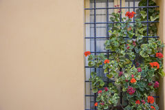 Italian window with metal grate, decorated with fresh flowers Stock Image