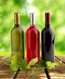 Italian winery Stock Photography