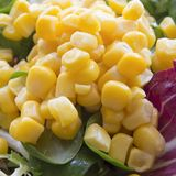 Italian yellow corn salad Royalty Free Stock Image