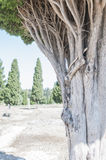 Italica Royalty Free Stock Images