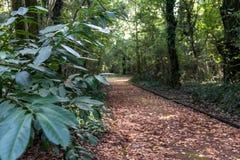 Italien CampaniaNaples Capodimonte skog Arkivbild