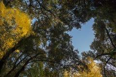 Italien CampaniaNaples Capodimonte skog Fotografering för Bildbyråer
