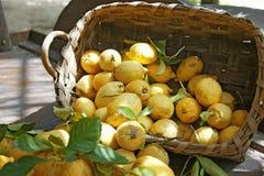 italien citronen Arkivfoto