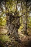 Italien, Emilia Romagna, Wald Stockbild