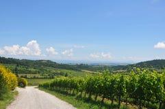 Italien - grön och sund vingård fotografering för bildbyråer