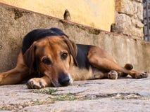 Italien - Insel von Elba, ruhiger Hund Stockfotos