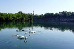 Italien, Lombardei, Adda-Fluss, Schwan mit Küken Lizenzfreies Stockbild