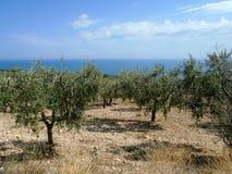 Italien - Olive Garden stockfoto