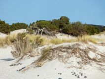 Italien, Sardinien, Carbonia Iglesias, Porto Pino, die Dünen setzen auf den Strand Stockfotos