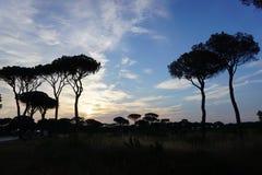 Italien, Toskana, Grosseto Maremma, Castiglione-della Pescaia, Sonnenuntergang in einem Kiefernwald stockfotos