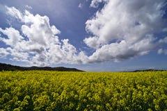 Italien, Toskana, Grosseto, Pian Alma, Panoramablick von einem auf dem Feld angebauten mit Canola lizenzfreies stockbild