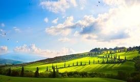 Italien; tuscany landskap; backeväg, cypressar och fält Royaltyfri Fotografi