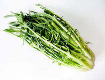 Italien typique de Puntarelle, romain, salade Photo stock